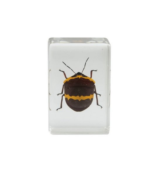 best selling Acrylic Resin Embedded Bedbug Specimen Block Transparent Paperweight Toys Student Favorite Natural Biology Science Learning&Teaching Kits