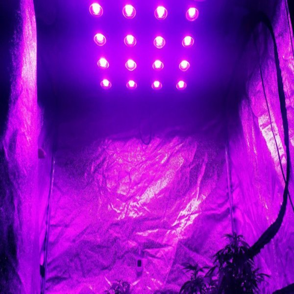 1440w 1200w 1000w Full Spectrum Plant Growth Led Grow Lights Sale Plant Lighting For Plant Growing Weeds Vegetable Indoor Plant Light Plant Growing