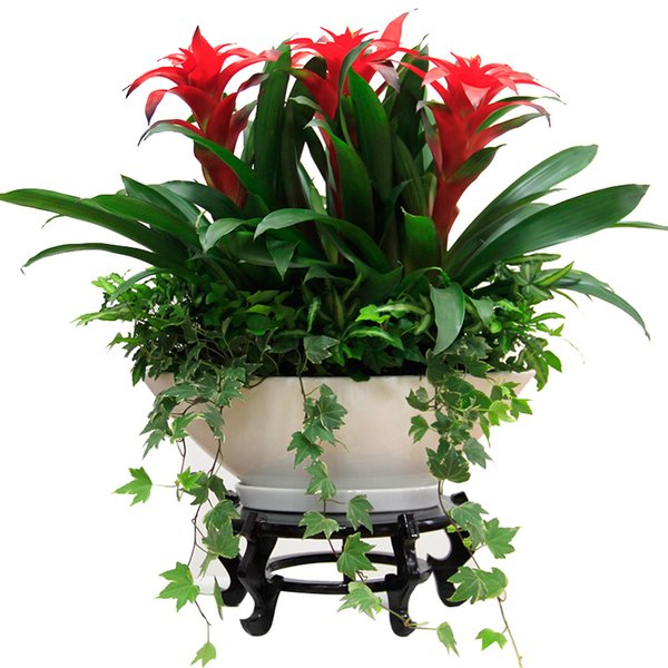 20pcs is our lunar New Year flower seeds lucky pineapple Ivy seed mix Festival gift indoor potted plants