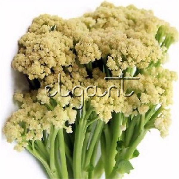 Cavolfiore sfuso Verdura cinese 50 pezzi Semi di ortaggi Gusto croccante Crescita facile Non OGM Seme di ortaggio Yummy Popolare