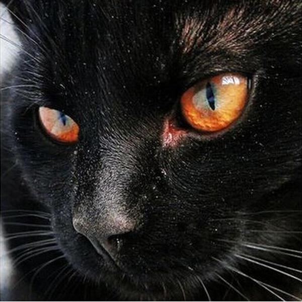 Satın Al Yüksek Kalite Diy Siyah Kedi Kafa Nakış Mozaik Elmas Boyama