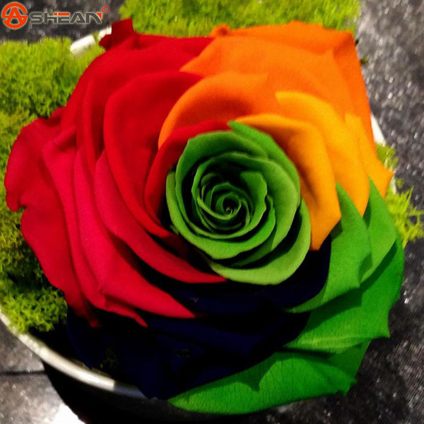 wholesale50 Rainbow Rose semi giardino domestico di DIY Colorful Rose Flower Plantplant bonsai