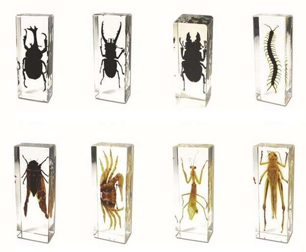 best selling Real 3D Educational Insect Specimem Toys&Gifts Acrylic Resin Embedded Bugs Collect Transparent Mouse Paperweight Kids Science Learning Kits
