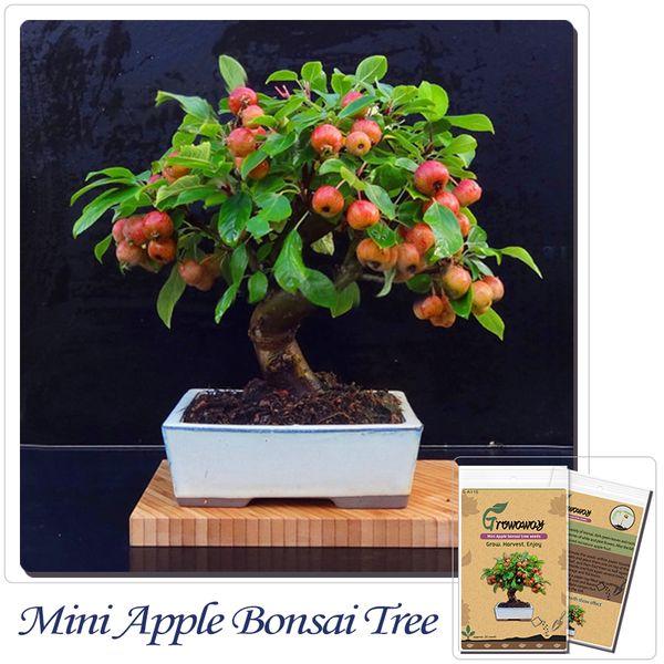 Großhandel Bonsai Fruchtsamen Mini Apfel Bonsai Baum, Frisch Lecker ...