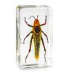 Real Locust Acrylic Resin Embedded Insects Teaching Specimen Transparent Mouse Paperweight Block Kid Biology Science Learning&Education Kits