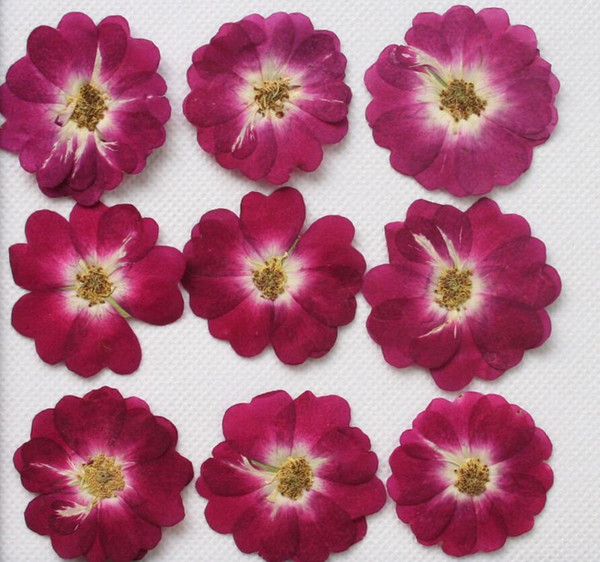 250pcs Pressed Press Dried Rose Chinese Flower Plants For Epoxy Resin Pendant Necklace Jewelry Making Craft DIY Accessories