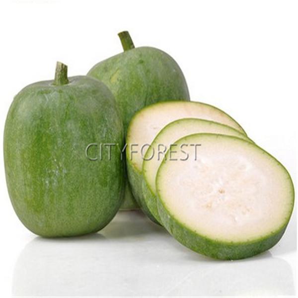 Chinesischer Wintermelonen-Kürbis 20 Samen wachsartige Melone NICHT-GVO-Heirloom-Gemüseprodukt einfach wachsende DIY Hausgarten-Anlage