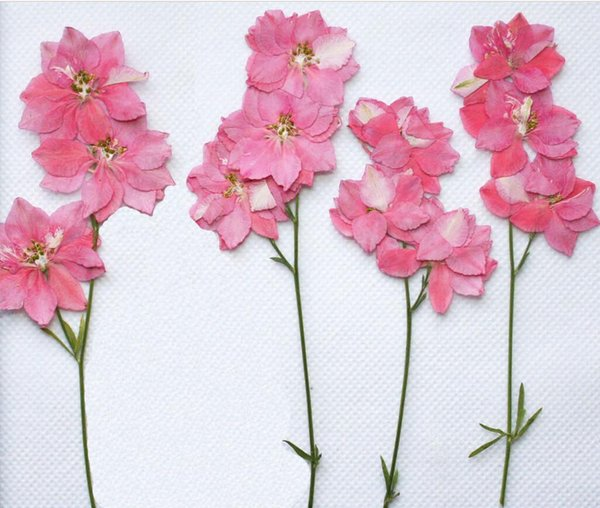 250pcs Pressed Dried Gaura Lindheimeri Flower With Branch For Epoxy Resin Pendant Necklace Jewelry Making Craft DIY Accessories
