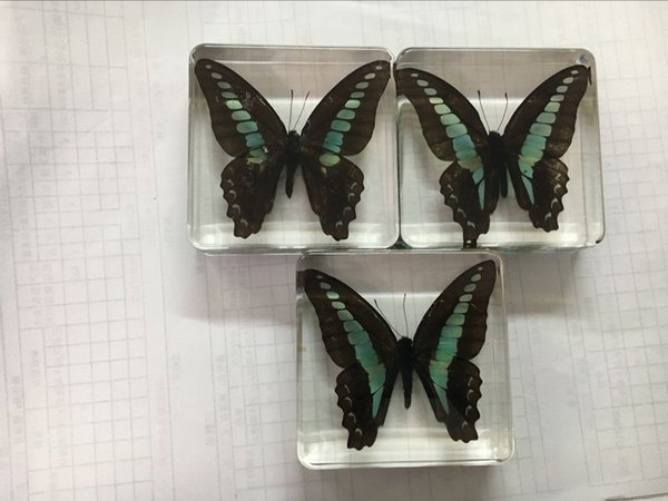 best selling Graphium Sarpedon Specimen Science&Discovery Kits Acrylic Resin Embedded Butterfly Transparent Mouse Paperweight Kids Biology Learning Aids