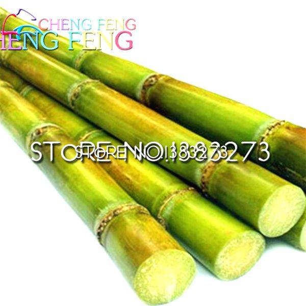 100 Pcs Sweet Natural Sugar Cane Plant Seeds Saccharum Officinarum Plant Seeds Rare Fruit Seeds Home * Fruits Bamboo Gigante