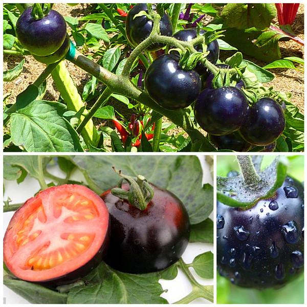 200 /bag black tomato seeds vegetable and fruit seeds Resistant to diseases ornamental plant fruit tree seedlings
