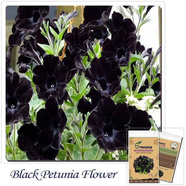 Acheter Graines De Fleurs De Bonsaï Belle Variété De Graines De Pétunia De  Velours Noir, Robustes, Balcon Durable, Fleur De Jardin De $0.3 Du Zy0518 |  ...