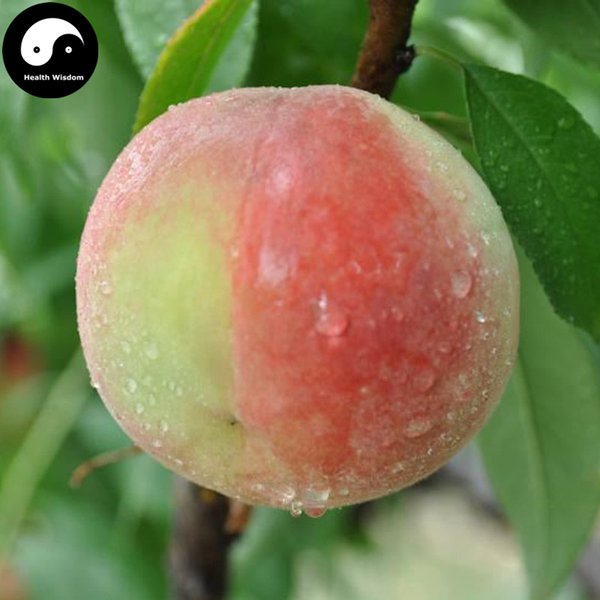 buy batsch fruit tree seeds plant peach fruit grow chinese, Beautiful flower