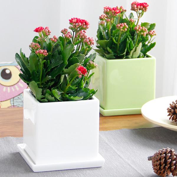 Großhandel 20 Stücke Langlebigkeit Blumensamen Topfblumen Vier Jahreszeiten  Blume Blühende Pflanzen Wohnzimmer Schreibtisch, Kleine Pflanzen ...