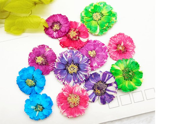 Small Daisy Natural Real Pressed Flowers, True Plants Specimens 6 Different Colors For DIY Photo Frame 120 Pcs Free Shipment