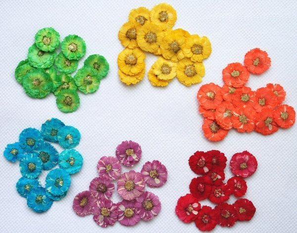 250pcs 18mm Pressed Dried Daisy Flower Dry Plants For Epoxy Resin Pendant Necklace Jewelry Making Craft DIY Accessories