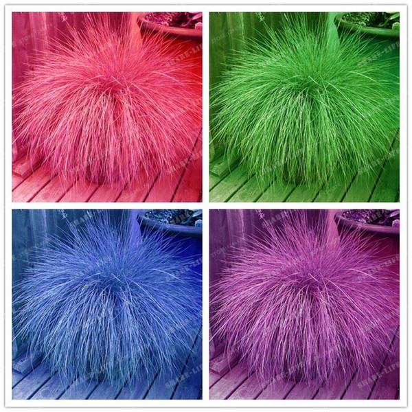 100 pz / borsa 4 colori Fescue Grass Seeds (Festuca glauca) perenne hardy ornamentali semi di erba vaso di fiori per la casa giardino