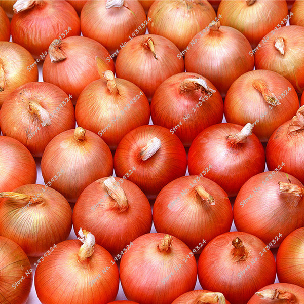 Free Shipping 200 Giant Onion seeds Non-GMO Vegetables Fruit Seeds Delicious Heirloom Seeds Plant for Home Garden