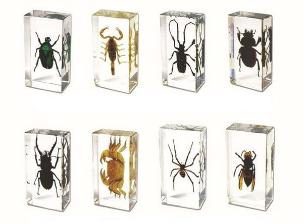 top popular Real Insect Embedded Specimen Paperweight Learning&Education Toy Transparent Mouse Acrylic Resin Animal Collection Nature Science Kit 2021