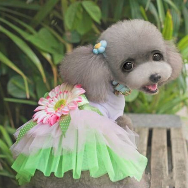 Cute Sunflower Pet Dresses With Cyan Bowknot Luxury Dog Coat Dress Good Quality For Spring Automn Min Order 25PCS