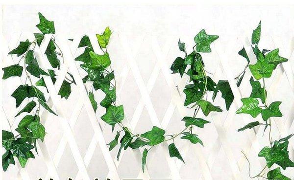 اللبلاب الحرير الخضرة