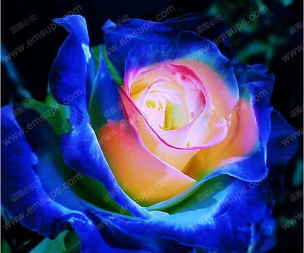 150 PC Raras Japonesas Azul Rosa Semilla Bonsai Semillas de flor Hermosa planta en maceta Rosas Semillas de flor