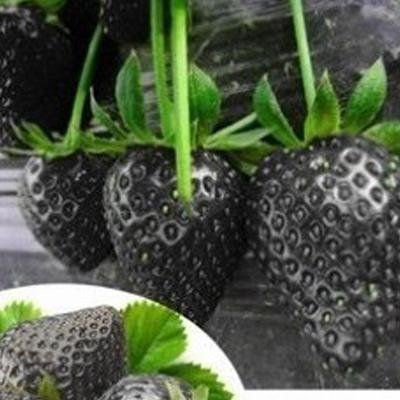 100 PCS Fruit Seeds Black Strawberry Seeds Bonsai Plants Seeds For Home & Garden Pot Garden Fruit and Strawberries