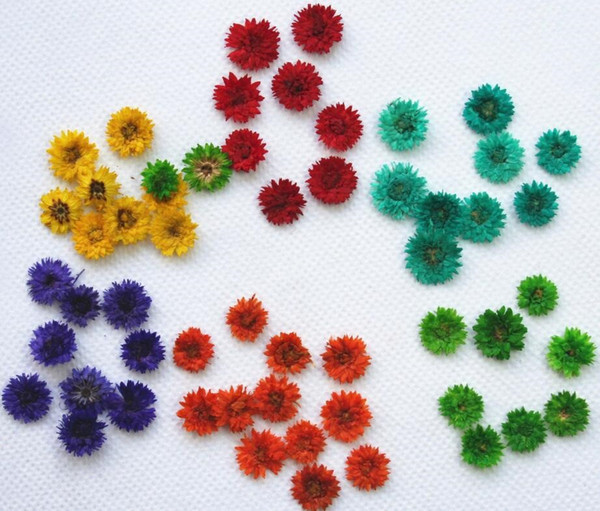 250pcs Pressed Dried Anaphalis Flower Dry Plants For Epoxy Resin Pendant Necklace Jewelry Making Craft DIY Accessories