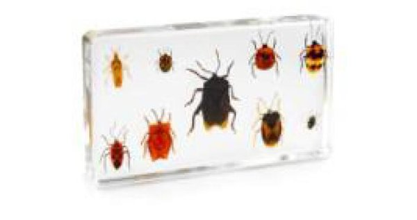 top popular 9 Bug Set Specimen Acrylic Resin Embedded Bugs Biological Specimen Transparent Mouse Paperweight New Type Kids Learning&Education Toys&Gifts 2021