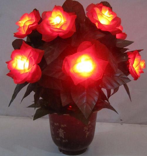 lighting roses