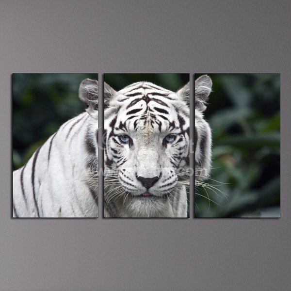 Modern 3 Piece Wall Art Painting White Tiger Home Decor Canvas Picture Wall Frames Animal Painting for Living Room Wall
