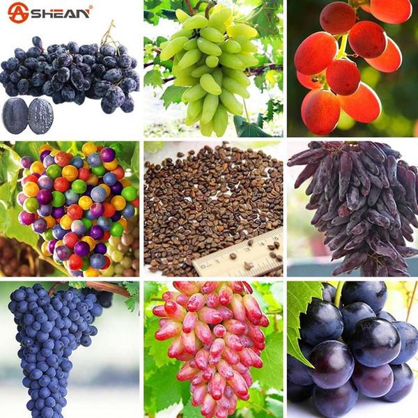100 Seeds / Pack 12 Kinds of Grape Seeds Advanced Fruit Seed Natural Growth Grape Sweet Kyoho Grape Gardening Fruit Plants
