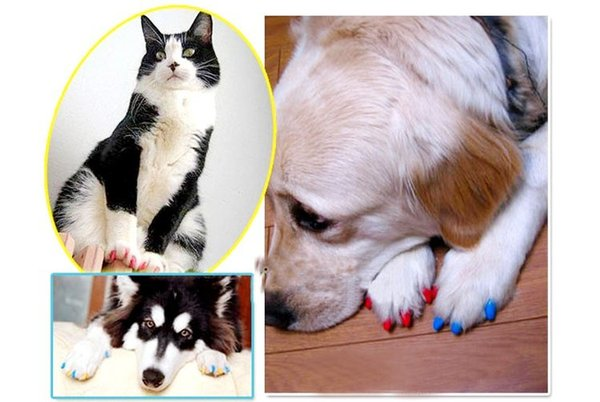 Wholesale 20pcs/lot Soft Pet Dog Cats Kitten Paw Claws Control Nail Caps Cover wraps catlike sets cat armor nail cap with glue