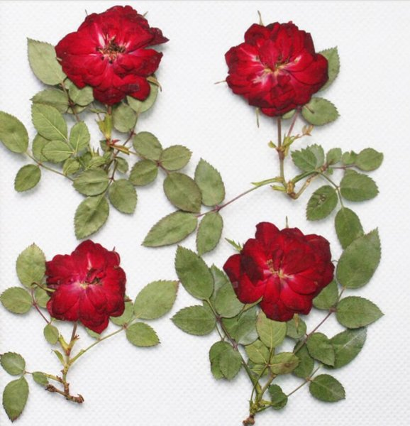 250pcs Red Pressed Dried Rose Flower With Branch&Leaf For Epoxy Resin Pendant Necklace Jewelry Making Craft DIY Accessories