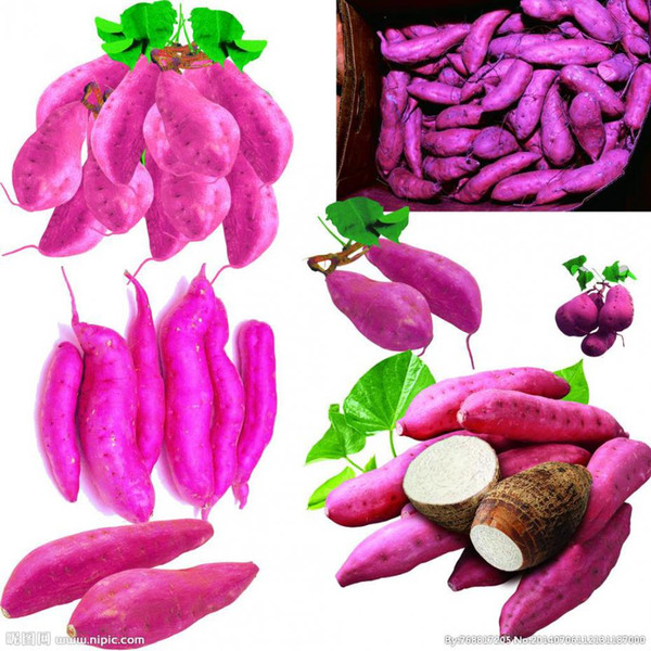 Giant Sweet Potato Seeds Health Anti-wrinkle Nutrition Green Vegetable Seed For Home Garden 50pcs/bag Free Shipping