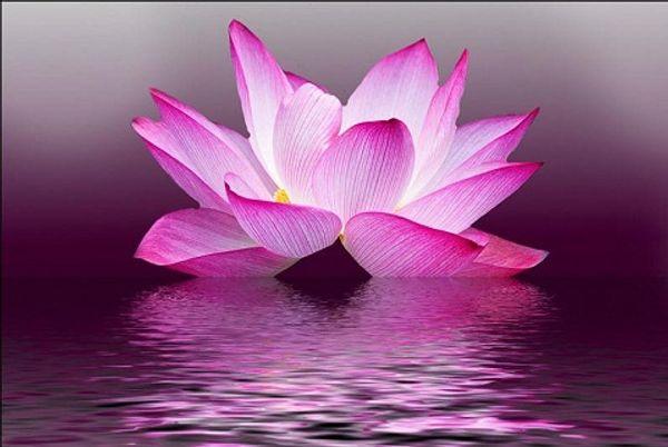 Emoldurado belas flores de lótus no mar, pura Pintado À Mão floral Art Pintura A Óleo Da Lona. Vários tamanhos F001