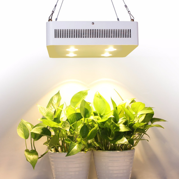 Original Cree Chip 800W Light Full Spectrum For Hydro Medical Indoor on indoor orange tree leaf, boston fern care indoor plant light, 3 tier plant stand grow light, indoor plants grow without soil, indoor house plants trees, dracaena house plant low light, indoor plants that can grow in water, indoor houseplants fern, indoor green plants with heart shaped leaves, indoor green plant name,