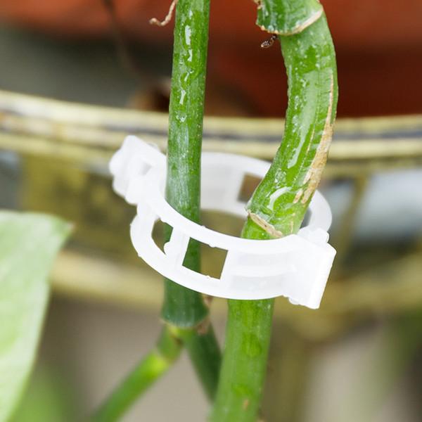 50 Pcs Durable En Plastique De Tomate Clips Attache Vignes Plantes Tomate Légumes Bush Tendril Binder Agriculture Des Clips De Plantation