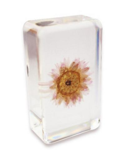 Resina acrilica Embedded Paper Daisy Flower Specimen Fermacarte trasparente Block Wedding Festival Regali InsegnamentoLearning Science KitsToys