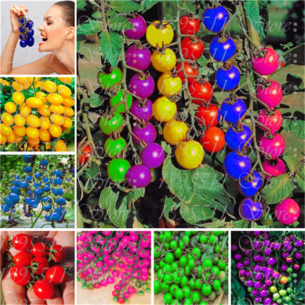 New! 120 pcs colourful cherry tomato seeds Balcony Fruits and Vegetables seeds Potted Bonsai Potted Plant Tomato Seeds Free Shipping