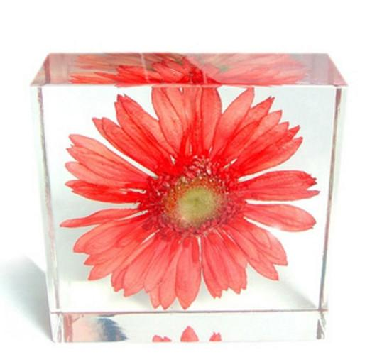 Acrylic Resin Embedded Real Flower Chrysanthemum Preservation Specimen Paperweight Block Wedding Gifts Teaching&Learning Tool Science Kits