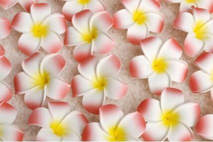Wholesale 100Pcs/lot 7cm Plumeria Hawaiian Foam Flower For Wedding Party Hair Clip Flower bouquet Decoration