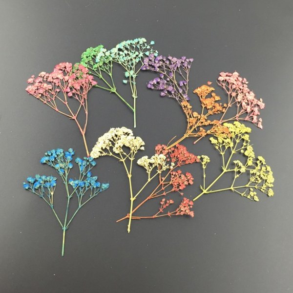 DIY Hand Made Flowers Colorful Mini Pressed Dried Gypsophila Flower For Wedding Party Mobile Phone Case Craft 0 21zx BB