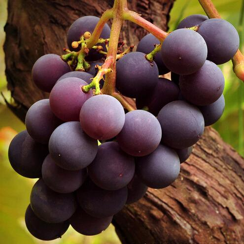 Grape Seeds, Courtyard delicious Fruit Plants for Family garden 50 particles/bag