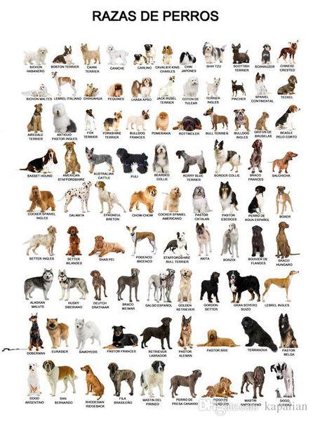 Tier Poster Der Hund Poster Home Decor Tapete Kunst Poster Drucken Fotopapier 16 24 36 47 Zoll