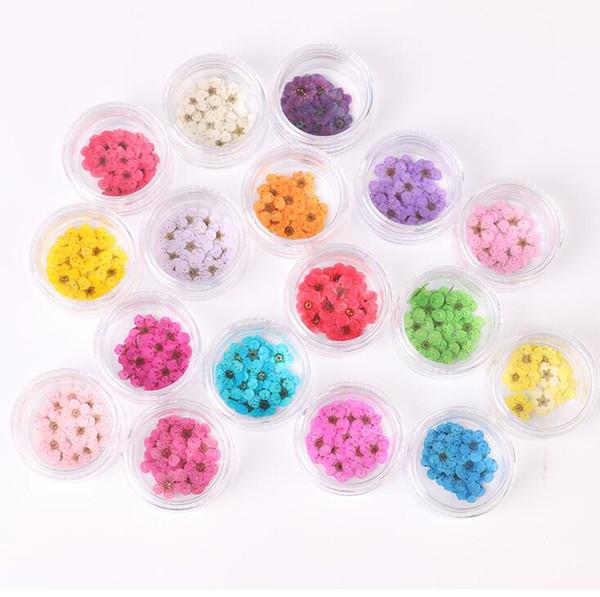 Küçük nergis kurutulmuş çiçekler erik çiçeği kabartmalı tırnak bitki örnekleri aromatik kurutulmuş kurutulmuş çiçek ve cep telefonu kabukları 20