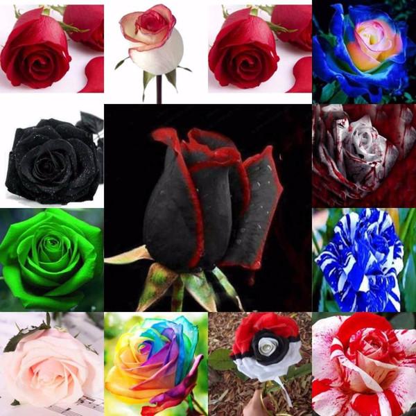 150 Tohumlar / paketi Mix Gül Tohumları So Büyüleyici Bonsai Çiçek Tohumları Nadir Ve Değerli Yıllık Çiçekler Bitki Ev Bahçe Için