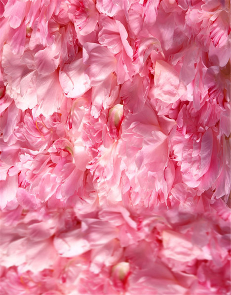 Digital Printed Soft Pink Flowers Petals Newborn Photography Backdrop Vinyl Baby Kids Children Backgrounds for Photo Studio Wedding