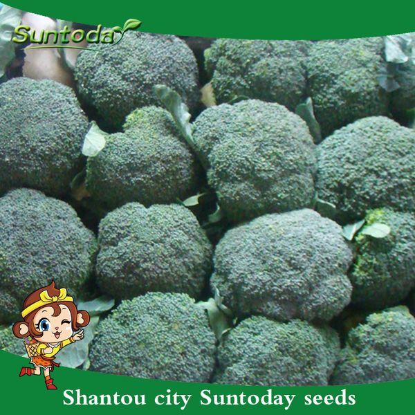 Suntoday Chinese BROCCOLI Brassica Oleracea Sprouting Vegetable Seeds Asian Garden Plant Hybrid Non-GMO Organic Fresh Seed