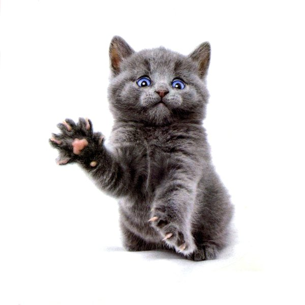 e4135215e The Cute Cat Of Blue eyes Waterproof Temporary Tattoos Sticker Body Art  Tattoo Beauty Animals Tattoo